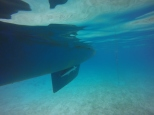 Getting our bottom cleaned by the remora.