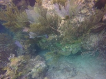 Coral at the Grotto