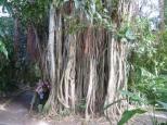Botanic Gardens, Road Town