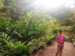 The walk to the plantation through some very luscious countryside.