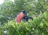 Barbuda 04
