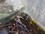 The creepy crab in the disused swimming pool.