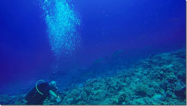 Diving in FP