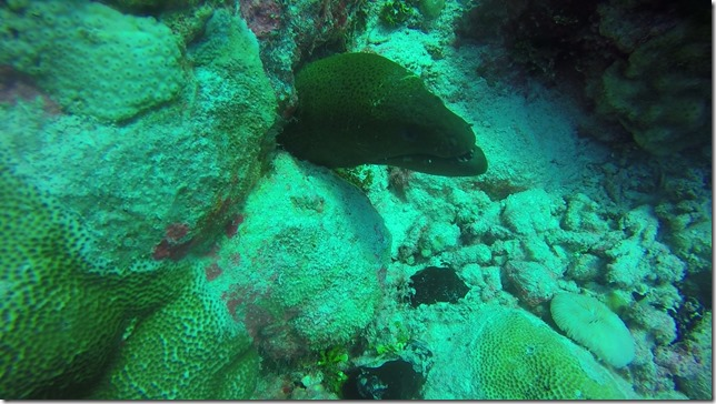 Moray Eel at Anse Amyot